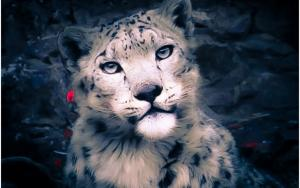 Snow Leopard (Panthera Uncia)  rChan or Shan