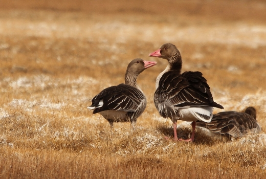 World Migratory Bird Day (WMBD) 2018