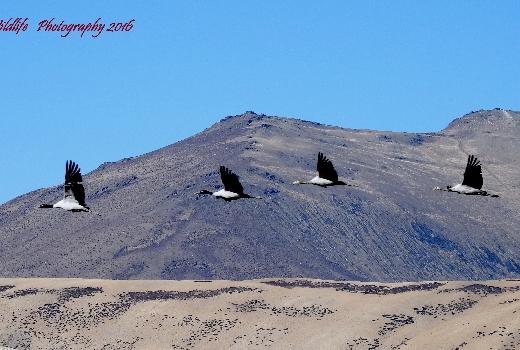 Ladakh Bird Exodus Week