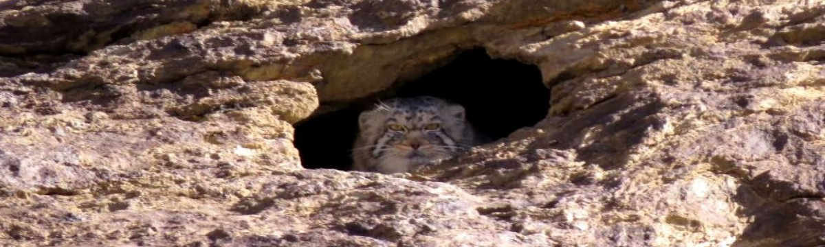 Checklist Of Mammals Ladakh